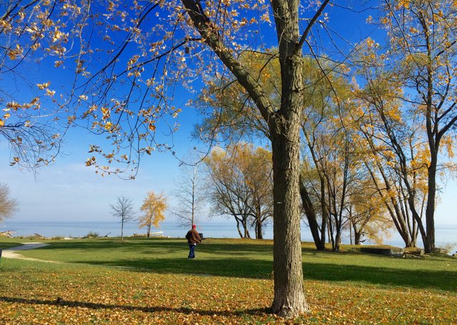 Overcrowded lakefront parks include Coronation Park