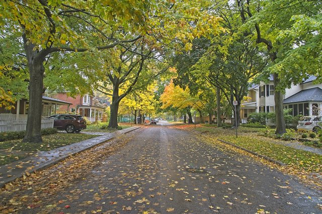 Fall colour in Old Town Oakville 2