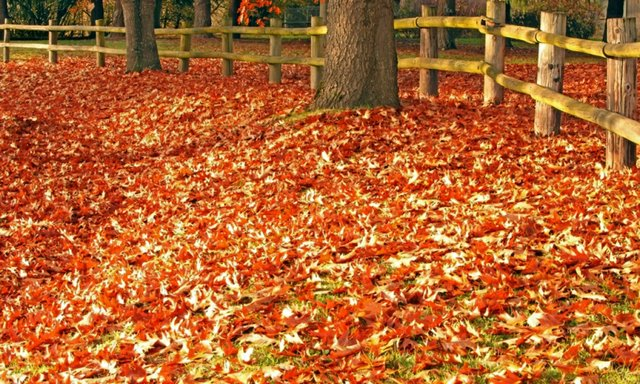 Strong wind Fall leaves on ground