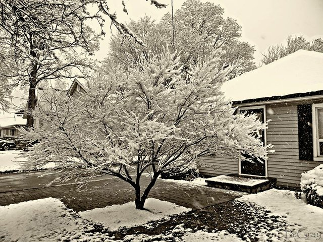 snow covering ranches of a tree