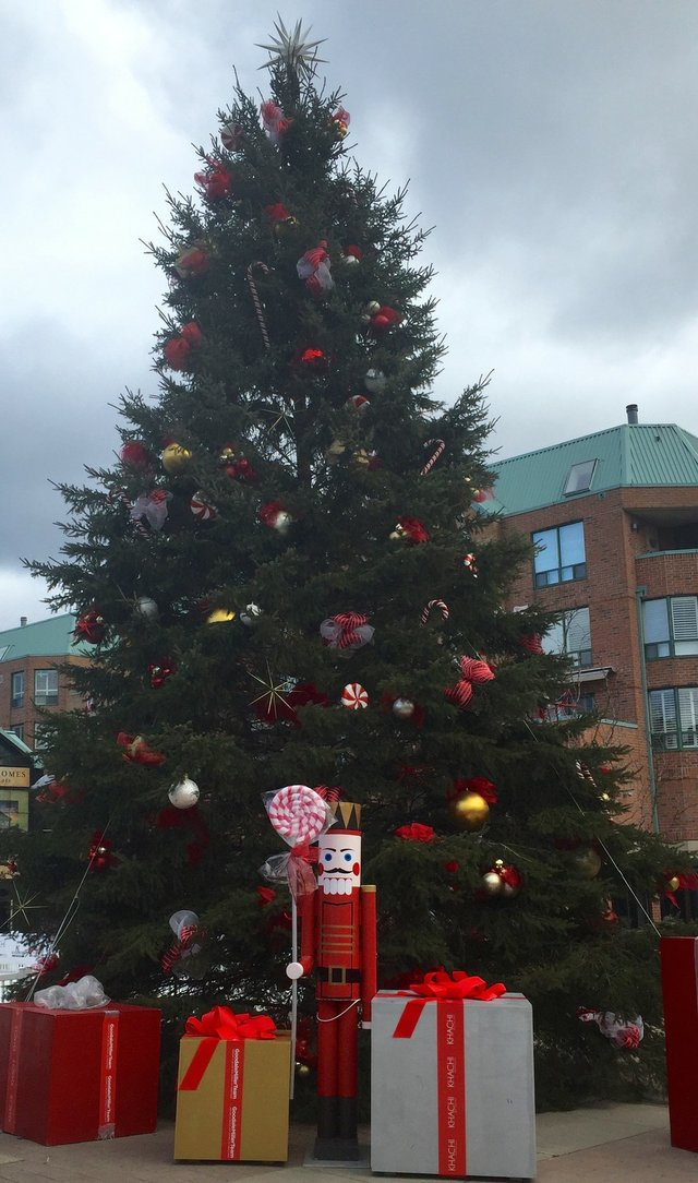 Christmas Tree in Town Square