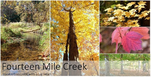 Tryptic of Photo of 14 Mile Creek