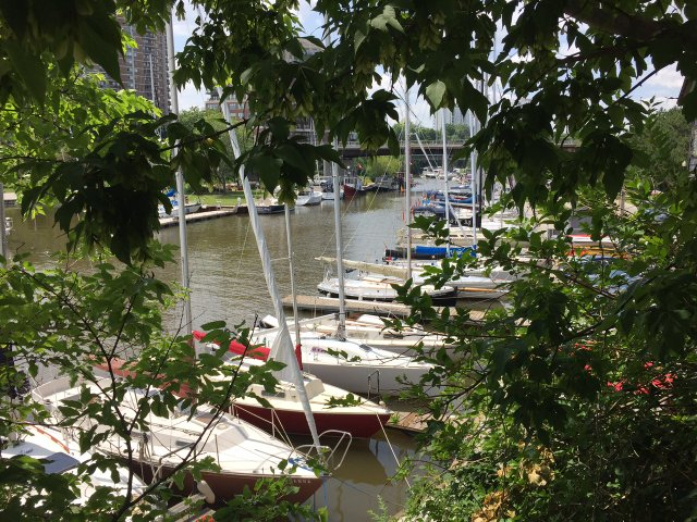 Sailboats in Oakville Harbour through leaves