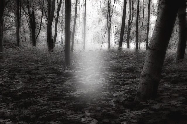 Forest B & W, Mindfulness, Oakville, Ontario
