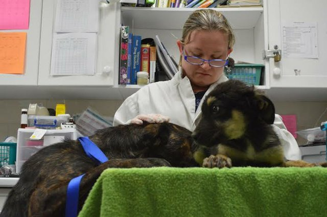 Vet looking at puppy with mom looking on