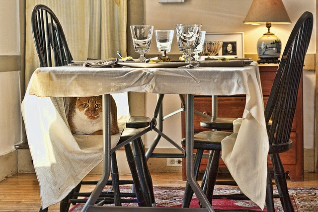 Cat on a chair under a set table
