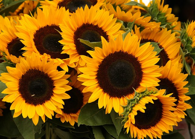 Arrangement of Sun Flowers
