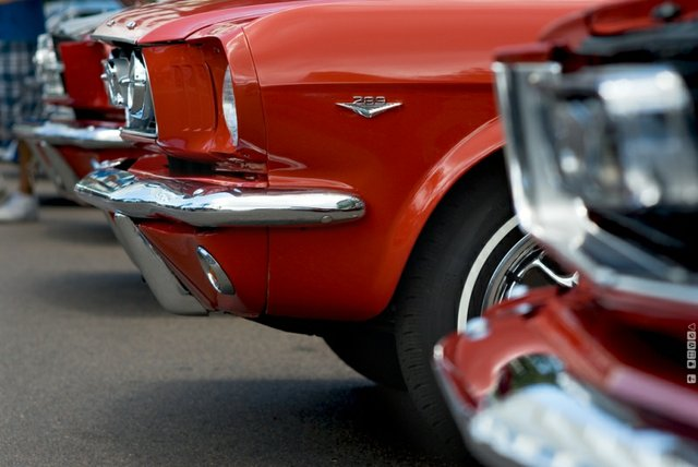mustangs-50th anniversary, ford, Oakville News, July 26 2014