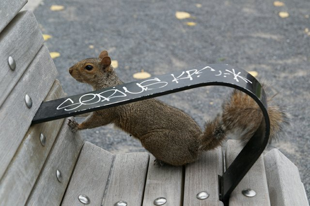Rodent on Bench in Park