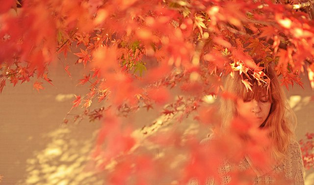 Young lady under a bunch of colour leaves