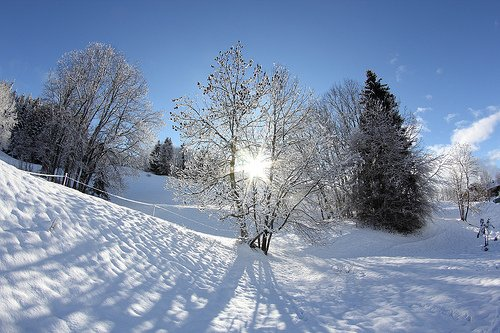 Winter Sun, Oakville News