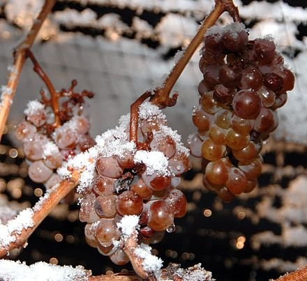 Ready for Icewine, Eiswein