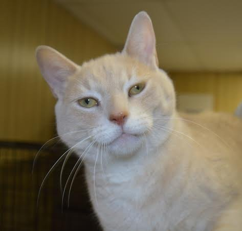 Oakville Milton Humane Society: Oakville News, Cat-A-Doption