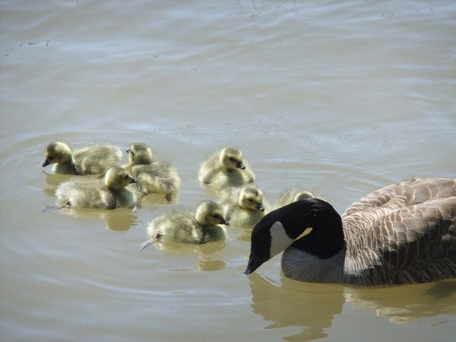 Mother Goose  &  Family